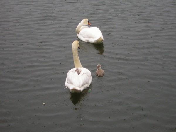 Fugle på Christiania