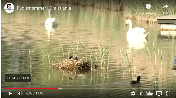 Fuglestemmer i Christiania