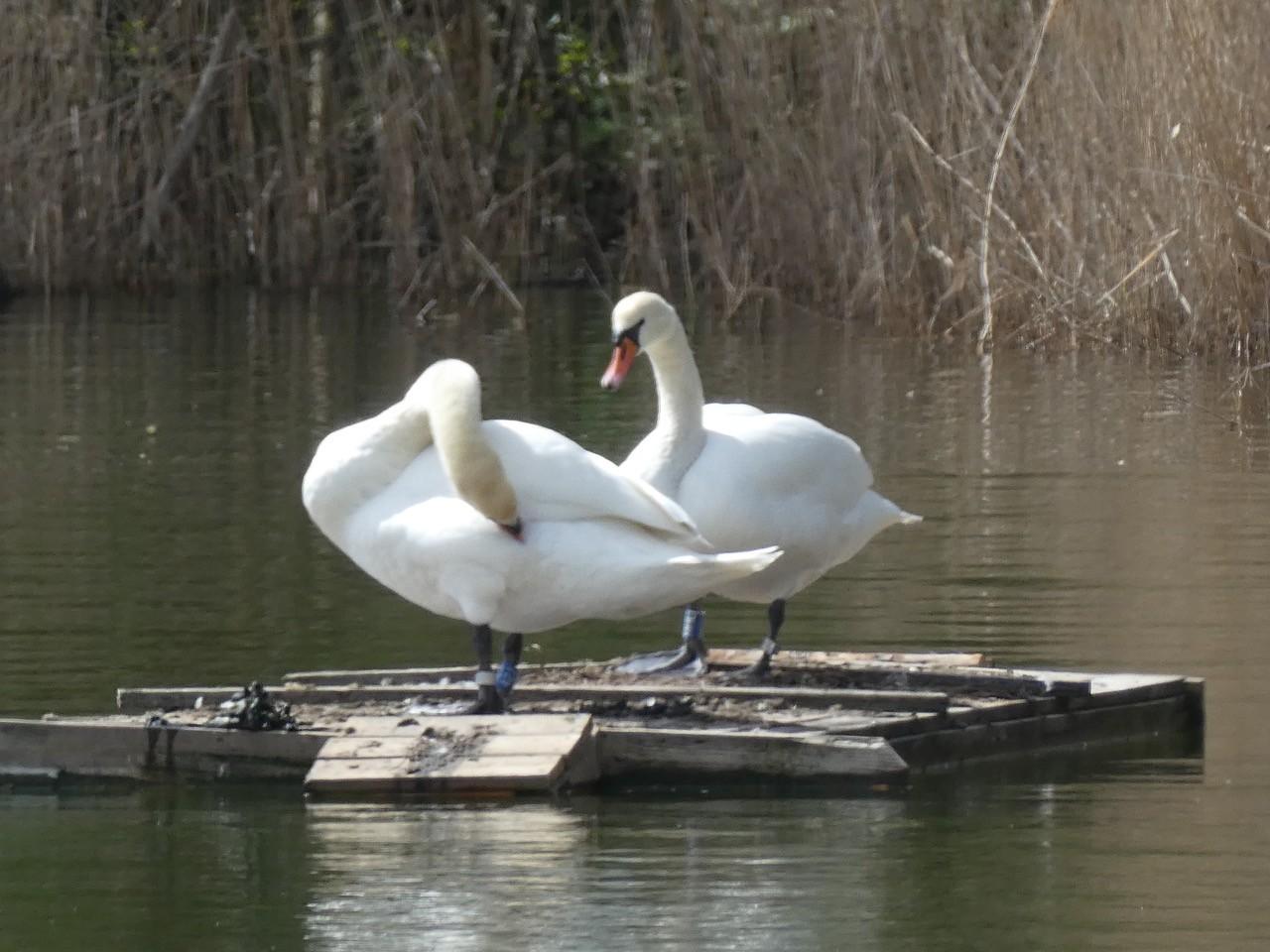 Tømmerflåder til fuglene (april – maj 2021)